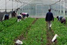 [In-Depth]: Organic Food In China