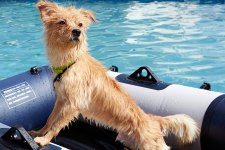 [Offbeat]: A Trip to the Dog Swimming Pool