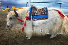 [Outbound]: Riding Slow With The Sheep & Yaks of Qinghai Lake