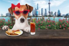 [The List]: A Human's Guide to Dog-Friendly Venues