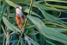 [Offbeat]: Birding in the Nanhui Wetlands