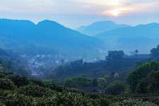 [Outbound]: Longjing Village, the Holy Land of Green Tea