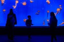 [In Focus]: The Shanghai Ocean Aquarium