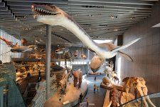 The New Natural History Museum is Five Years Old. It's Still Fantastic.