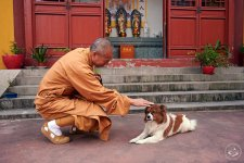 This Buddhist Monk Has Rescued Thousands of Animals in Shanghai