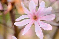 [In Focus]: 2021 Cherry Blossom Festival