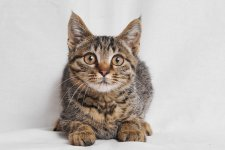 SmSh x SCAA: Adopt These Adorable Cuties!