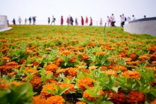 Chongming Island Is Hosting the National Flower Expo. Is It Worth a Visit?