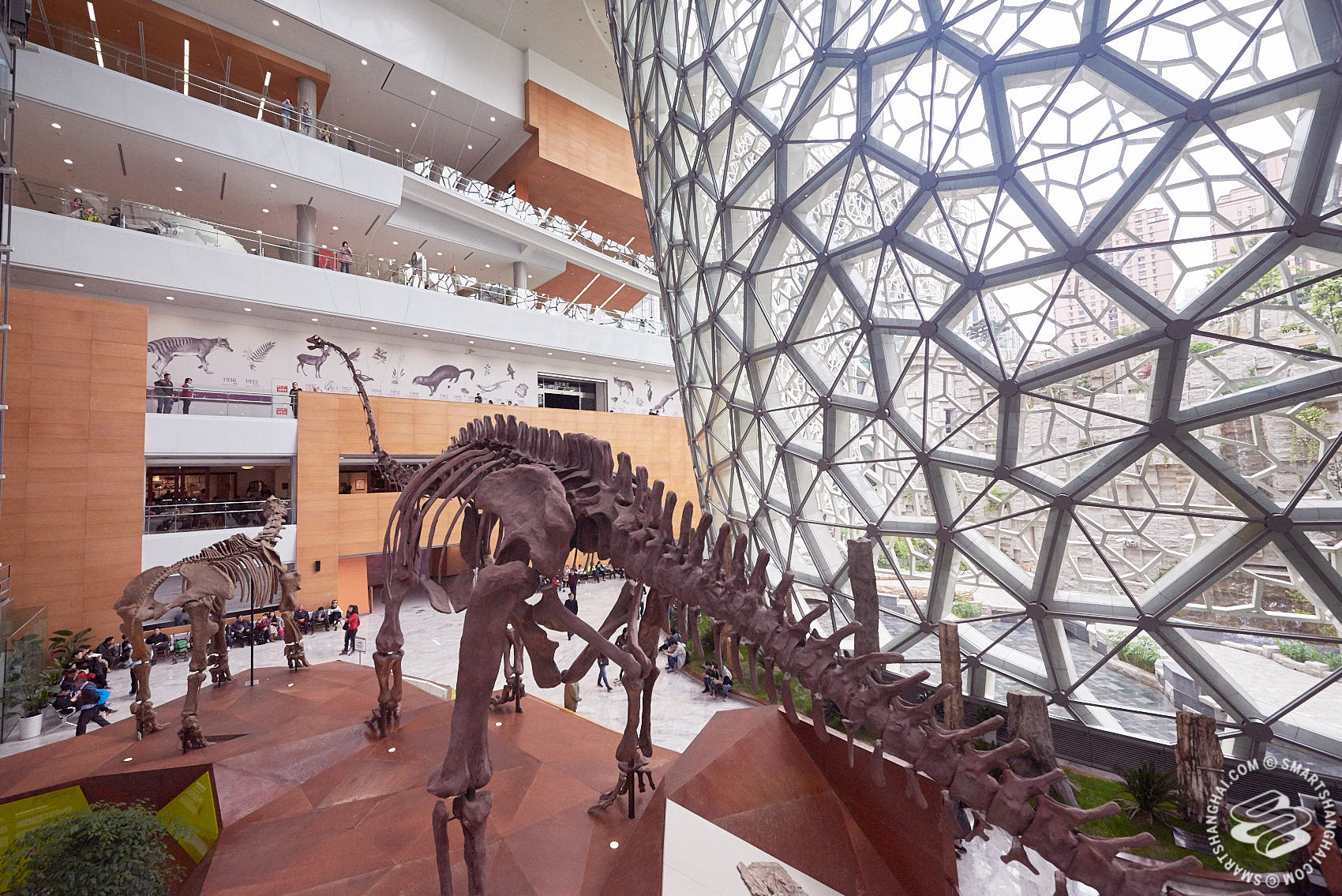 Shanghai Natural History Museum Shanghai