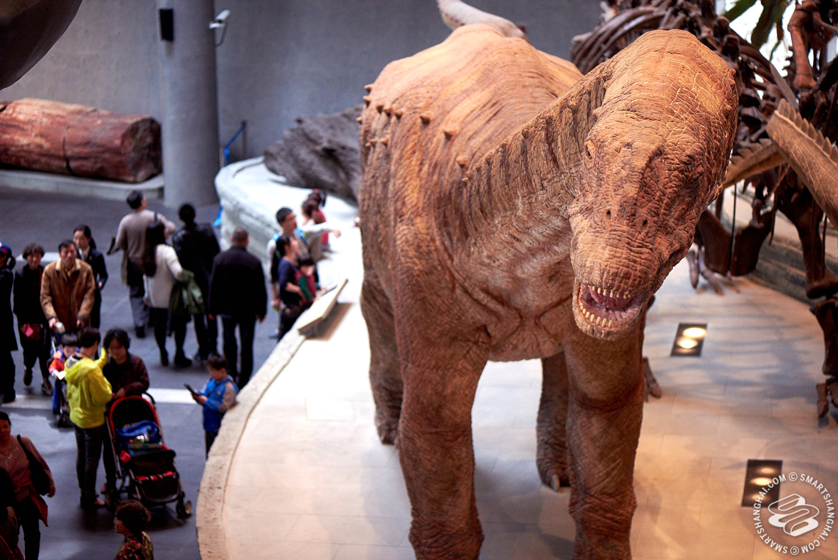Natural History Museum Shanghai